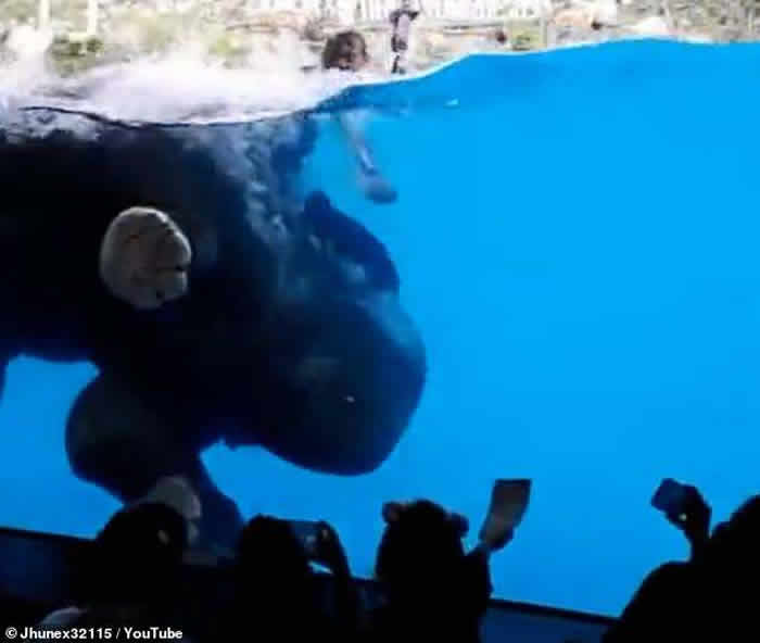 泰国动物园逼大象水中表演 保护动物人士斥训练过程残酷