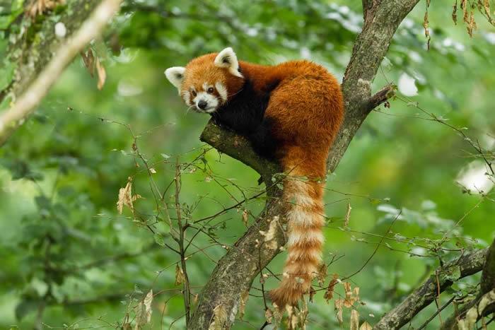 人类造成的哺乳动物灭绝速度远远超过地球物种能够恢复的速度