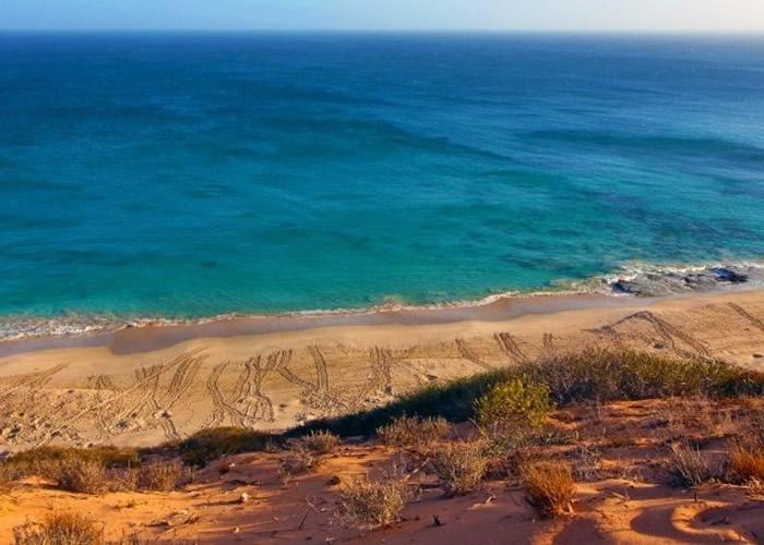 当局近年致力重建德克哈托格岛(图)的生态系统。