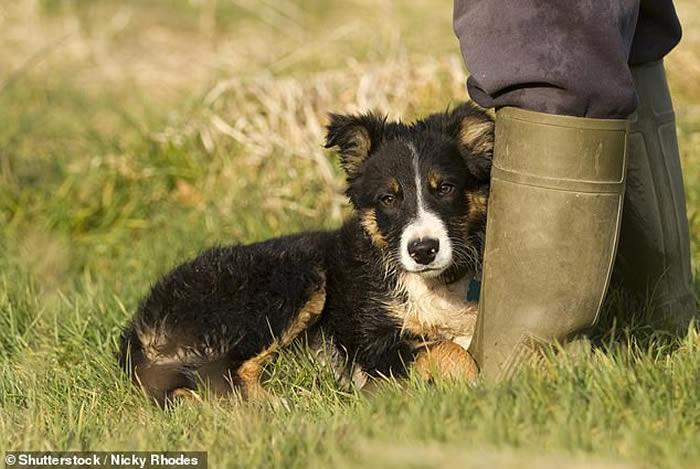 《生物学报》:狗在9000年前的新石器时代已成为人类的好朋友