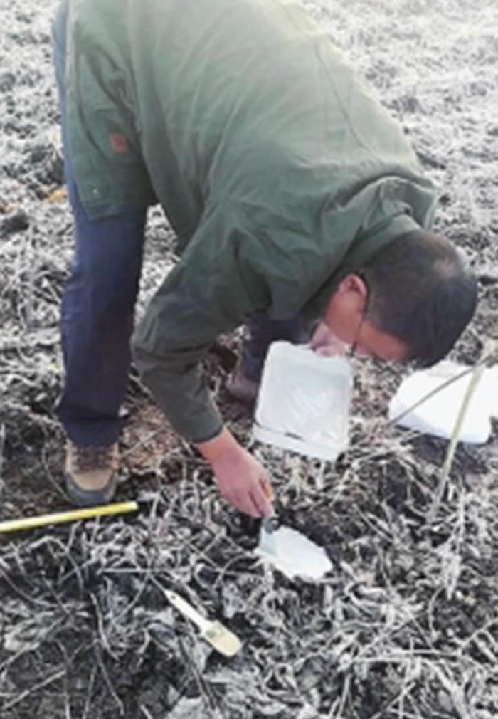 专家在车祸现场附近检验发现的东北虎足迹。