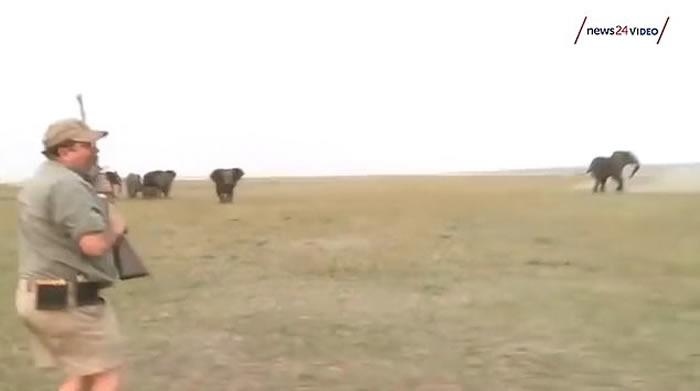 猎人在非洲纳米比亚打猎连开数枪轰中雄象 象群悲愤冲向施袭者