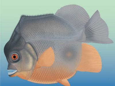 """德国南部石灰岩沉积物中发现1.5亿前的""""食人鱼""""Piranhamesodon"""