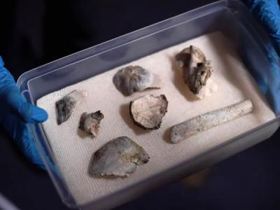 """12000历史的古人类化石""""露西亚""""在巴西国家博物馆大火中幸存"""