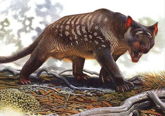 气候变化导致袋狮在4万~3万年前灭绝
