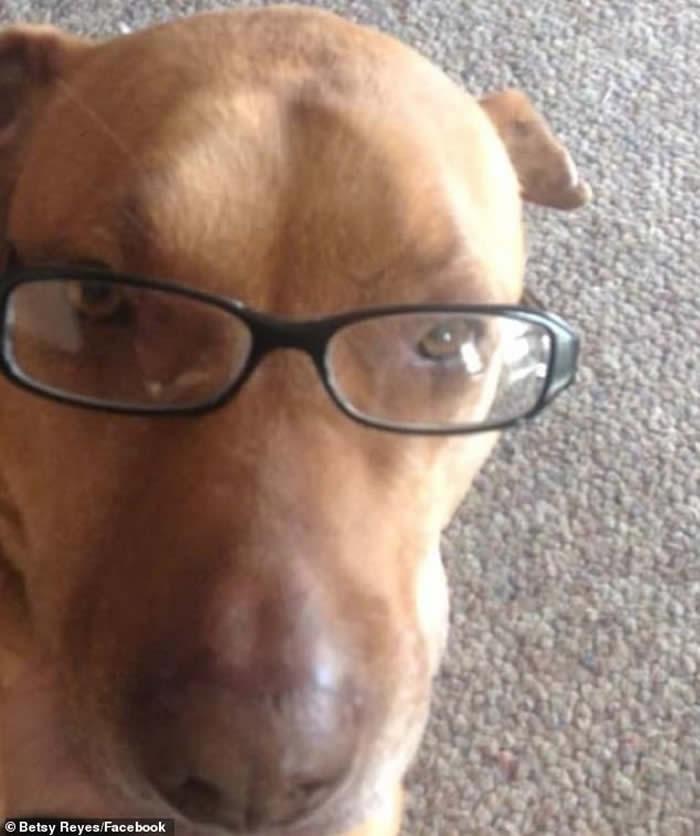 美国俄克拉何马州一只狡猾的狗会装成流浪狗骗途人买汉堡包喂它