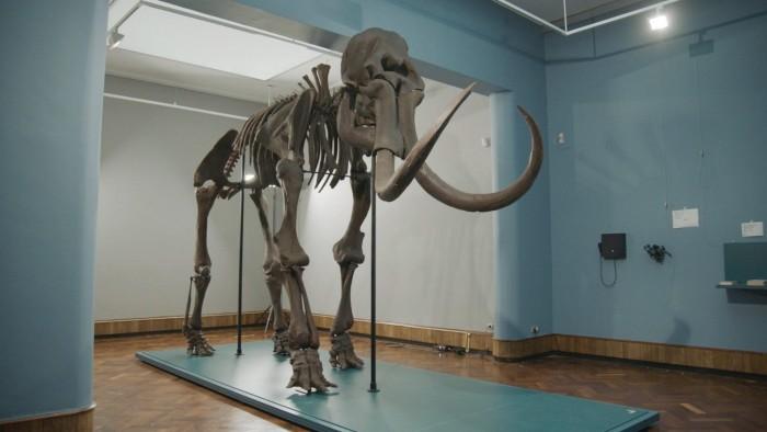 比利时Materialise公司利用3D打印技术为博物馆打造出猛犸象骨架