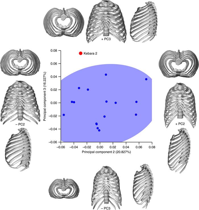 尼安德特人胸部虚拟三维重建:呼吸机制可能与现代人有所不同