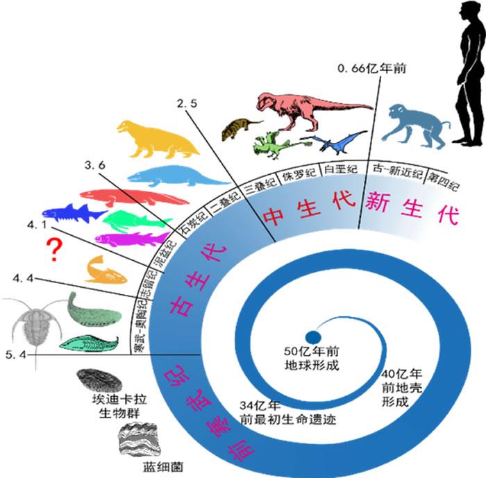 地球生物进化旅程(图片由朱敏提供 下同)