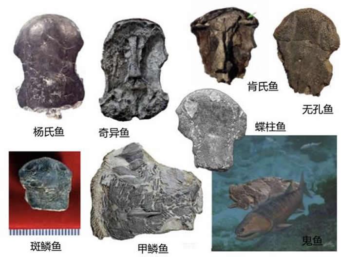 各种鱼类的化石