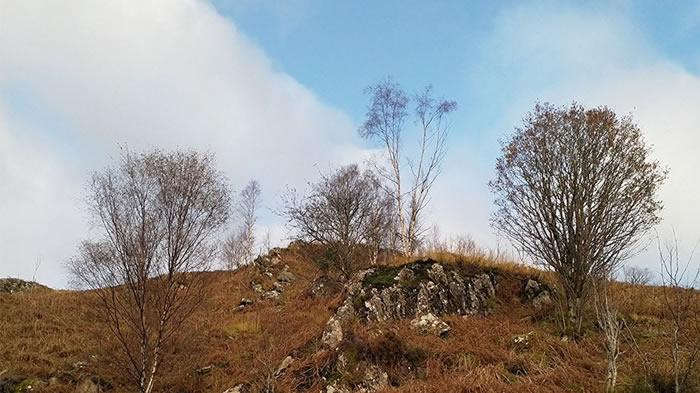苏格兰男子想拍秋日美景却拍出视错觉图 你能找到里面的鹿吗?
