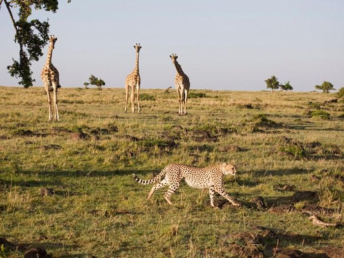 野生动物种群数量大幅减少。