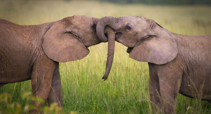 《环球旅讯新闻》:博茨瓦纳被评为野生动物园最佳的非洲国家