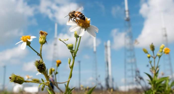 美国联邦通信委员会(FCC)批准SpaceX发射7000余颗卫星的计划