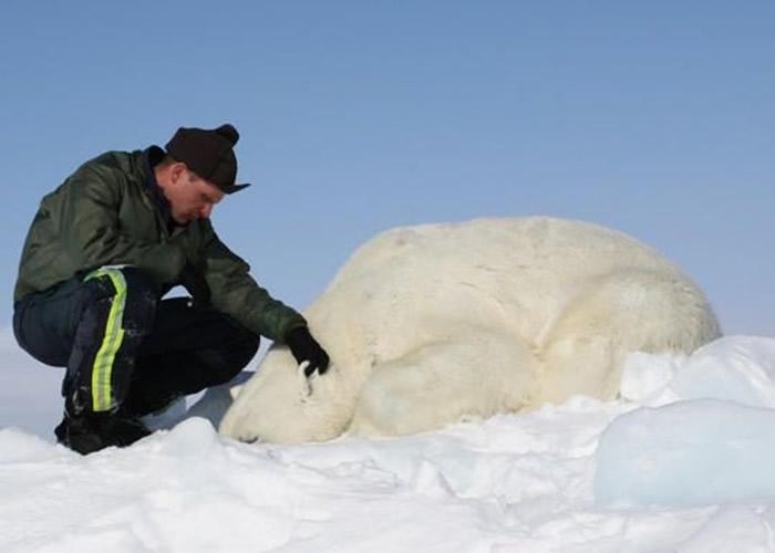 雷格尔与华盛顿大学联手,统计楚科奇海峡的北极熊数量。