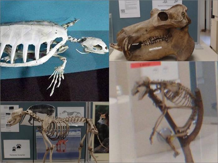 被盗的骸骨标本极为稀有。