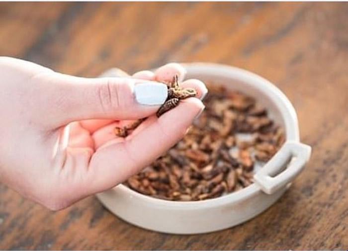 英国超市推出零食蟋蟀。