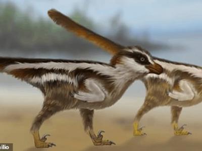 韩国发现世界上最小的恐龙足印化石 推测身形仅如麻雀大小