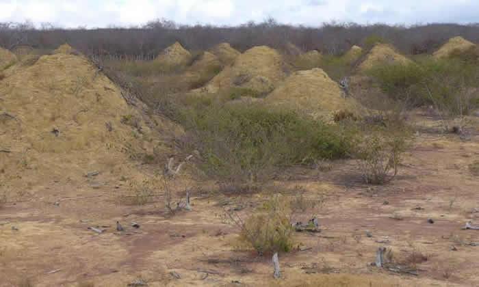 巴西东北部发现3800年历史白蚁窝 巨大土丘群面积相当于整个英国大小