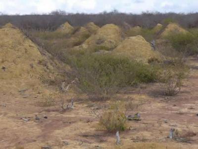 巴西东北部发现3800年历史白蚁窝 巨大土丘群面积相当于整个英国