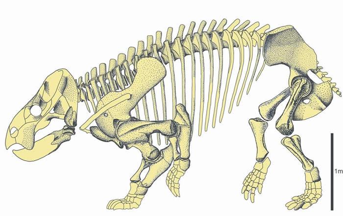 大象大小的哺乳动物近亲二齿兽Lisowicia bojani在晚三叠世出现 当时恐龙才刚进化出巨大体型