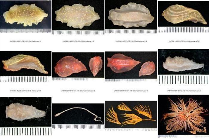 深海物种离开海底难以生存。