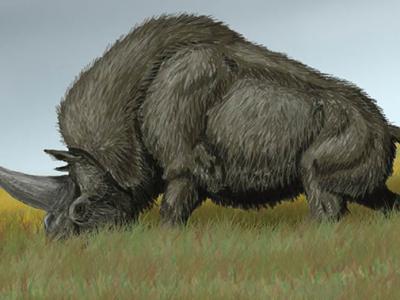 西伯利亚独角兽完全可以与现代人祖先相遇