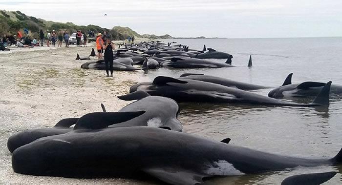 27头巨头鲸和1头座头鲸在澳大利亚克拉金固隆国家公园海岸搁浅