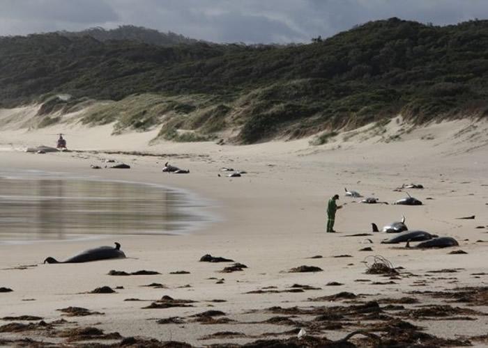 澳洲维多利亚省偏僻海滩有28条鲸鱼搁浅死亡