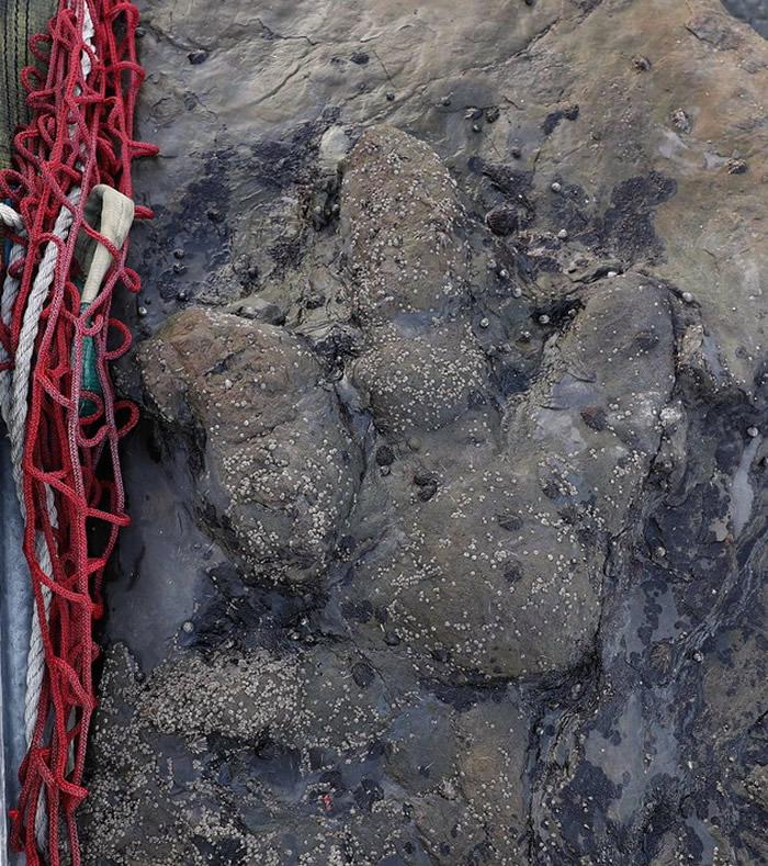 西班牙阿斯图里亚斯省发现兽脚亚目恐龙脚印化石