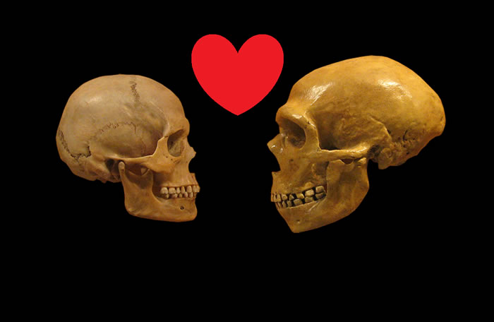 尼安德特人与现代人曾发生多次基因交流