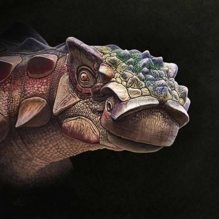 强森刺头龙- 这幅纹理精细的画像描绘2018年七月命名为强森刺头龙(Akainacephalus johnsoni)的新种甲龙,也带给我们了解这只7500万年前