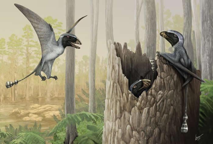 双型齿翼龙群 - 在这幅画里,侏罗纪翼龙中的长爪双型齿翼龙(Dimorphodon macronyx)在1.9亿年前的英格兰海岸丛林中觅食与寻找遮蔽。美国佛罗里