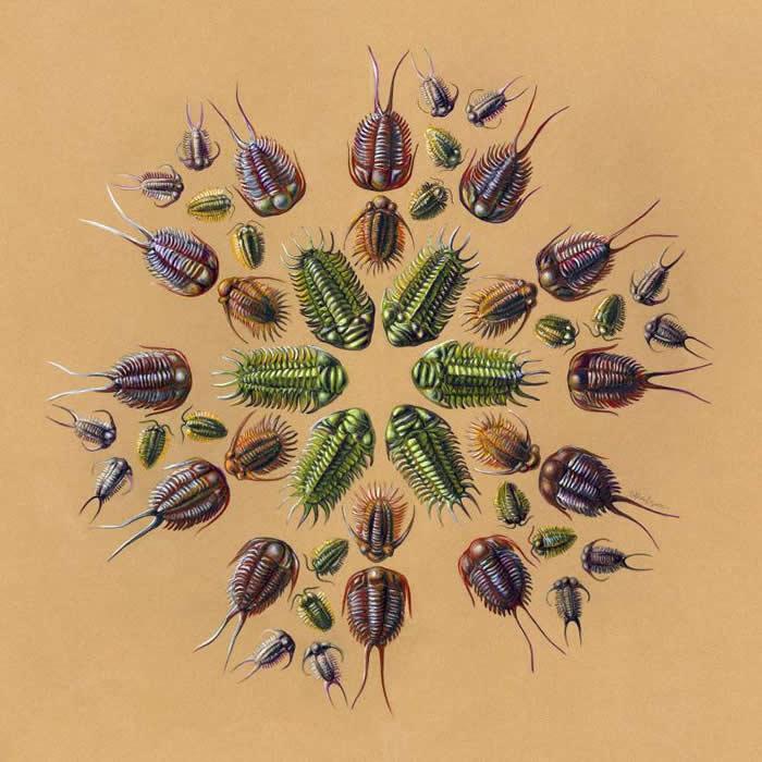 三叶虫曼陀罗- 三叶虫(Trilobite)属于节肢动物,和昆虫与甲壳动物是亲戚,从化石中已知三叶虫有各式各样的型态和构造,且种类多达惊人的2万种。 「这个星球