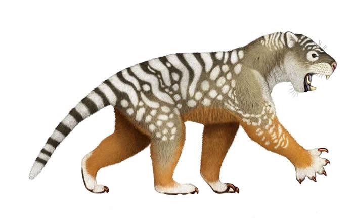袋狮研究 - 澳洲史上体型最大的有袋掠食动物,袋狮(Thylacoleo carnifex),直到4万年前都还生存在地球上,时间与澳洲大陆最早的原住民重叠。 「