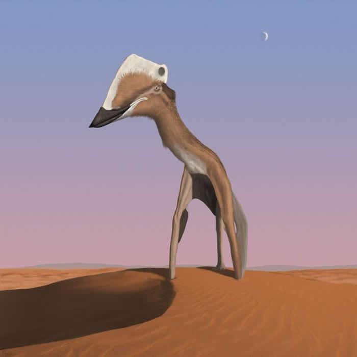 巨人一瞥 - 有些神龙翼龙(azhdarchid pterosaur)体型非常巨大,翼展可譬拟小飞机,站立时身高近似长颈鹿。在这幅美国插画家米迪奥.迪奥罗(Mi