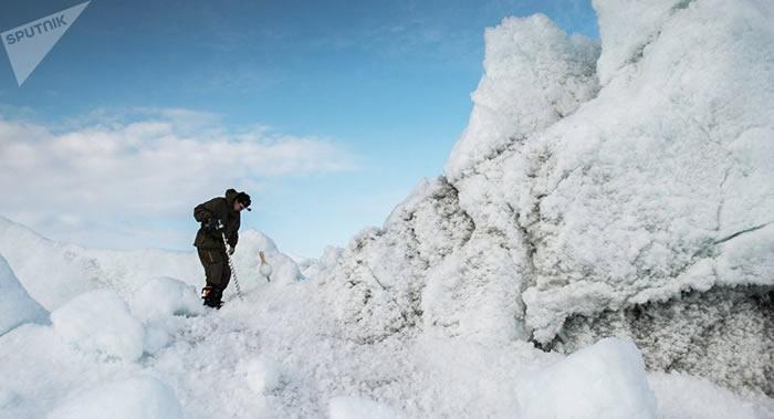 北极圈萨尔达赫岛新近纪岩石上首次发现悬铃木、山毛榉、赤杨、柳树和木兰果印迹