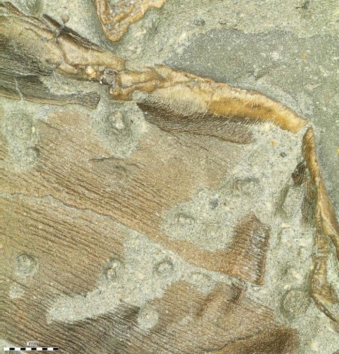首次发现鱼龙脂肪化石 意味着其是温血爬行动物
