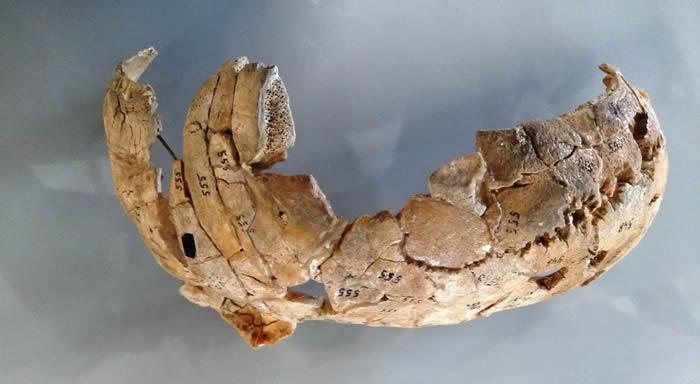 波兰境内8000年前的谋杀案 纳雷夫河河岸发现石器时代猎人头骨