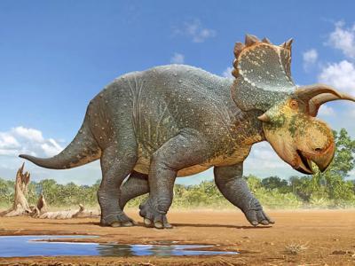 美国亚利桑那州南部发现新的角龙类恐龙Crittendenceratops Krzyz