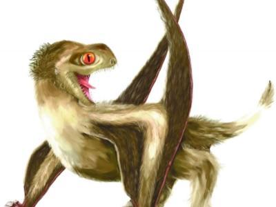 短尾翼龙身上发现羽毛状毛发结构