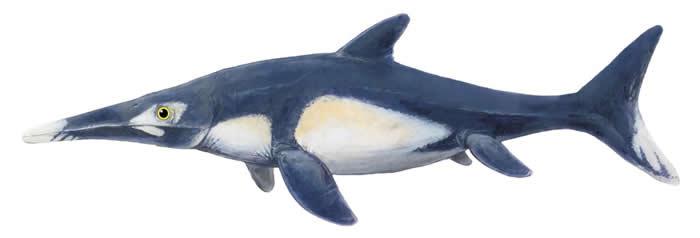 插图描绘狭翼鱼龙在世时可能的外表。 <br>学者并不知道这种动物的切确颜色与花纹,但是化石证据显示它的背部颜色比腹部深。 <br>