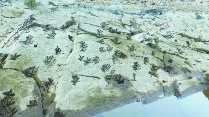 """贵州三都县都江镇打鱼社区河水褪去后惊现""""老虎跳""""印痕化石"""