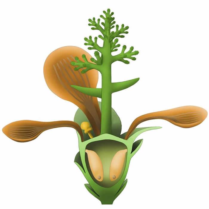 """中国古生物学家发现地球上第一朵花——1.74亿年的""""南京花"""""""