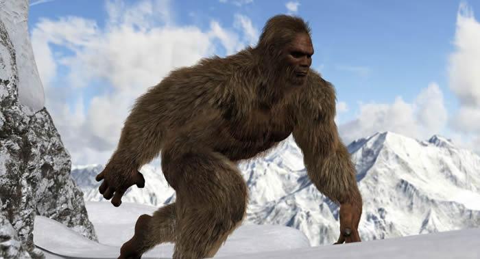 """科学家彻底解开""""雪人""""之谜:生活在喜马拉雅山区的熊"""