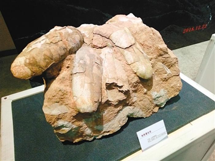 秦岭商丹盆地采集的椭圆形恐龙蛋属于晚白垩世恐龙蛋新类型——商丹重壁蛋