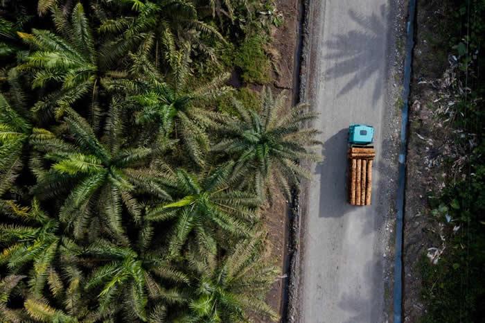 根据联合国粮农组织与世界银行于2006年发布的一份报告,厄瓜多的森林砍伐率在全世界排名第九,是南美洲排名最高的国家。厄瓜多也是拉丁美洲第二大油棕生产国,在全球排