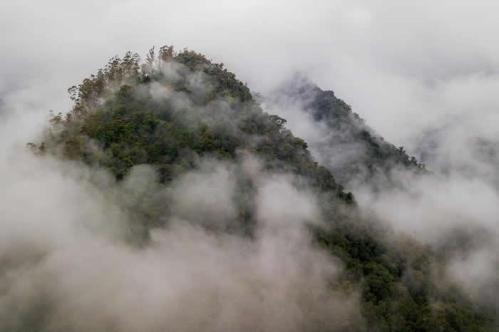 厄瓜多西部的热带雨林属于查科地区,具有丰富的生物多样性。在这些云雾下,该区拥有至少25%的全球植物多样性,还有只在当地栖息的动物物种。 PHOTOGRAPH B