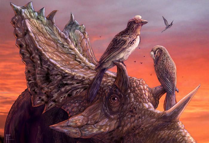 最完整的北美反鸟化石与现代鸟类具有相似的空气动力结构
