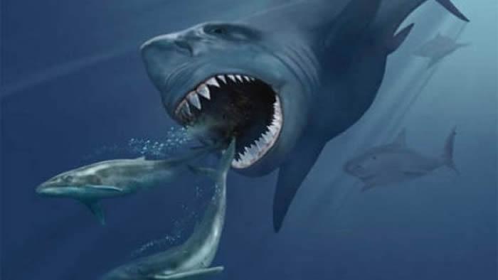 260万年前超新星爆发导致巨齿鲨等巨型海洋动物灭绝?